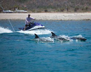 Desi & Dolphin 2