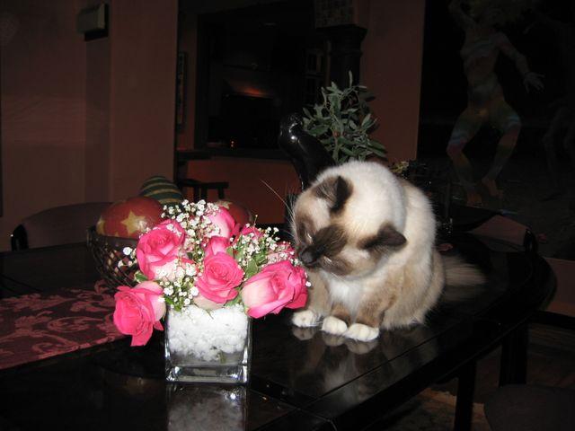 EulaMae & Roses